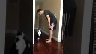 Кошачьи обнимашки смотреть онлайн видео от Кошки в хорошем качестве