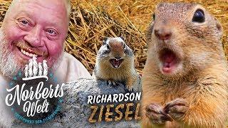 Richardson ZIESEL | ERDHÖRNCHEN als Haustier? | NORBERTS WELT | Zoo Zajac