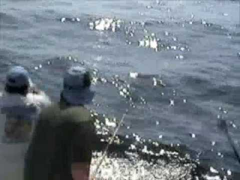Zane Grey Reef Trophy Black Marlin - HD