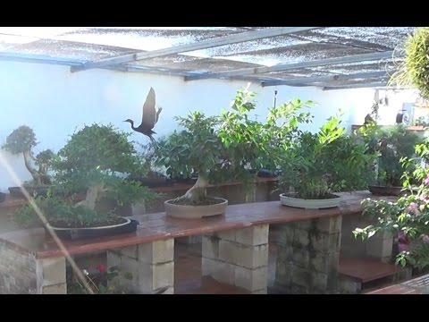 Vlog ampliación Escuela de Bonsai - FINAL