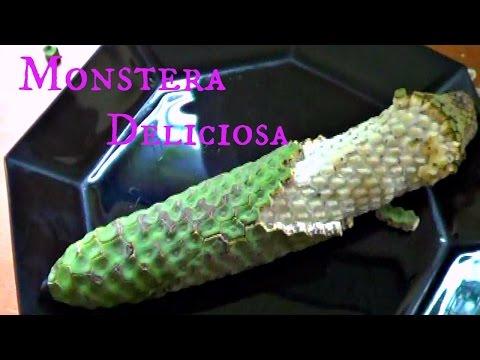 Monstera Deliciosa Review - Weird Fruit Explorer - Ep. 108