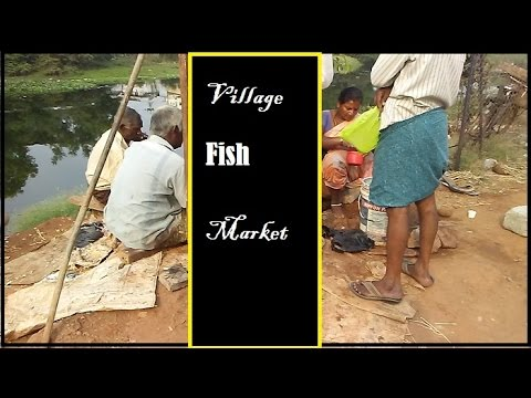 Village fish market village travel vlogs india vijayawada for Village fish market