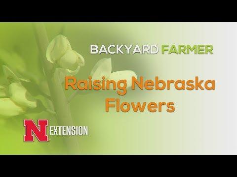 Raising Nebraska Flowers