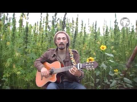 Cannabis Song - Frei wie der Wind