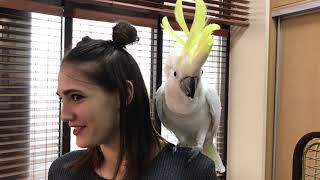 Попугай Какаду Кирюня ругается 🤬