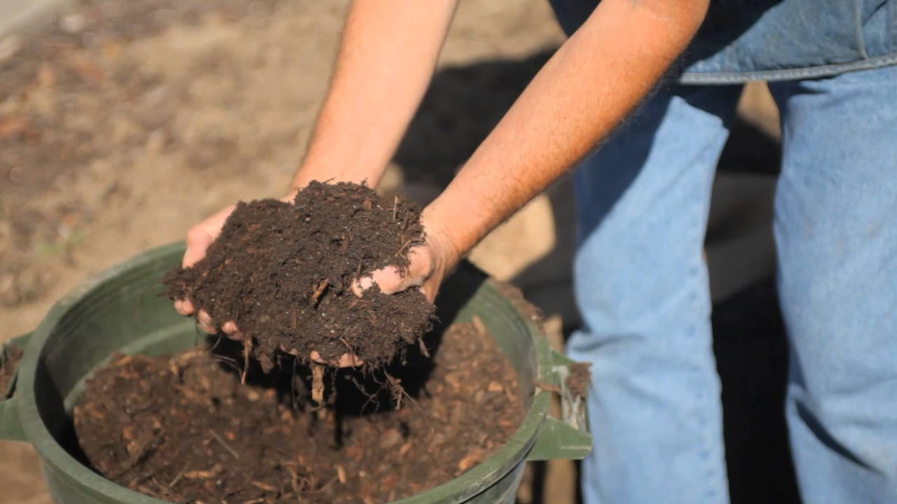 how to prepare the soil for apple trees fall u0026 winter gardening