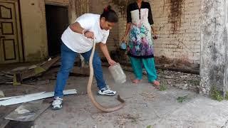 INDIAN SNAKE CATCHER   BHAVNA PATEL  MO 9328097271  ( JEEVDAY GROUP ) 24 HRS FREE SEVA  SNAKE RESCUE
