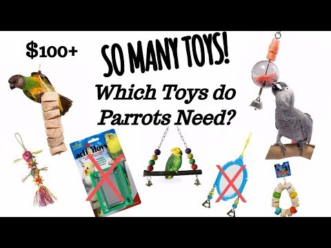 HUGE PARROT TOY HAUL! | Which toys are best for birds/parrots?