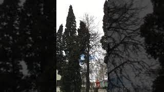 2020.04 мемориал погибшим 65 тысячам советским военнопленным, братское захоронение Кресты, Псков