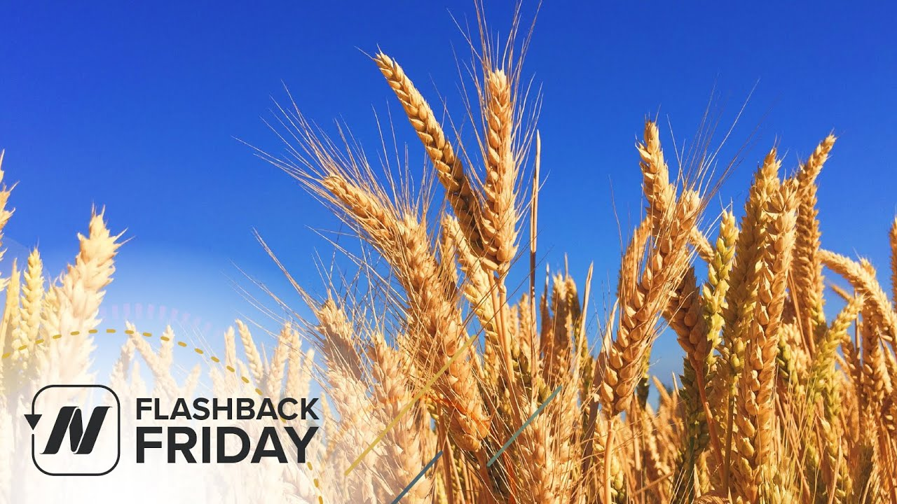 Flashback Friday: Is Gluten Sensitivity Real? & GF Diets - Separating the Wheat from the Chat