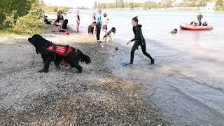 #мирживотных Собаки-Спасатели 2020г /тренировка на реке Рейн