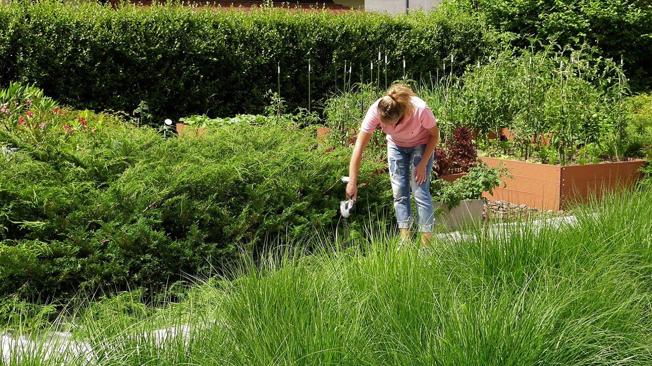Lipiec w ogrodzie. Kalendarz ogrodnika na 06.07 - 12.07. Prace ogrodnicze w lipcu