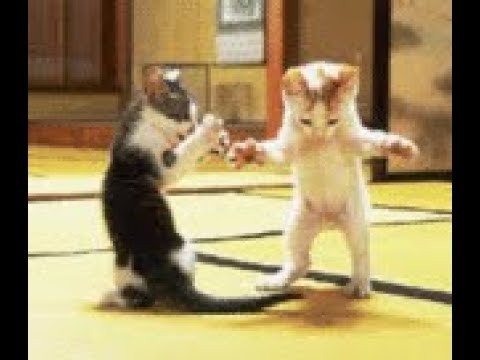 Gokil !!! Eta Terangkanlah Versi Kucing ampunilah