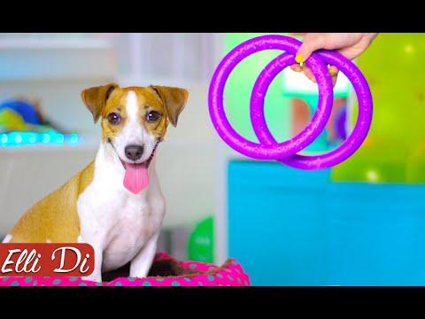 ОБЗОР PULLER - НОВАЯ ЛЮБОВЬ ДЖИНЫ ФРОМ УКРАИНА | ПОКУПКИ ИЗ ЗООМАГАЗИНА | Elli Di Собаки