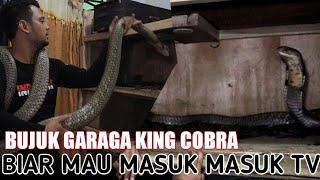 GARAGA KING COBRA AKHIRNYA MAU MASUK TV