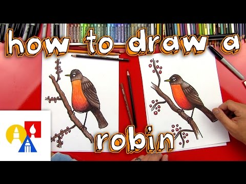 How To Draw A Robin Bird (realistic)