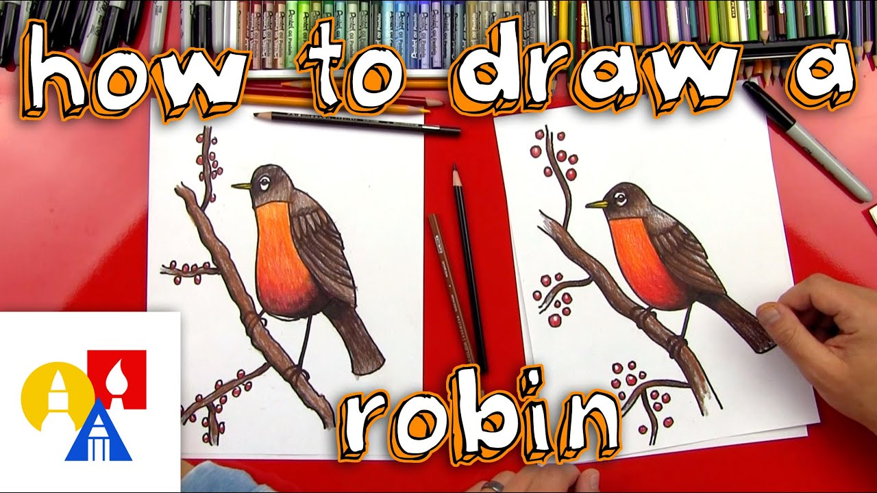 how to draw a robin bird realistic youtube