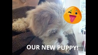 Roblox toys and dolls: OUR NEW PUPPY!🐕