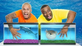 One of DerekDeso's most viewed videos: WHAT'S IN THE BOX CHALLENGE - UNDERWATER OCEAN ANIMALS!