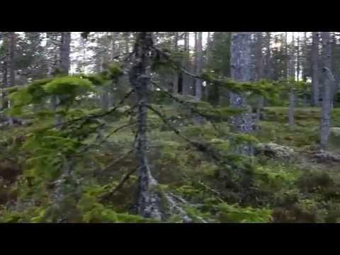 Walking in the forest in Kongsberg, Norway
