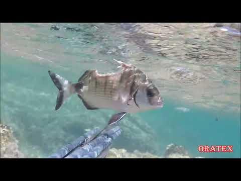 HALF FISH ALIVE IN SEA
