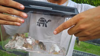 found-tons-of-baby-mice