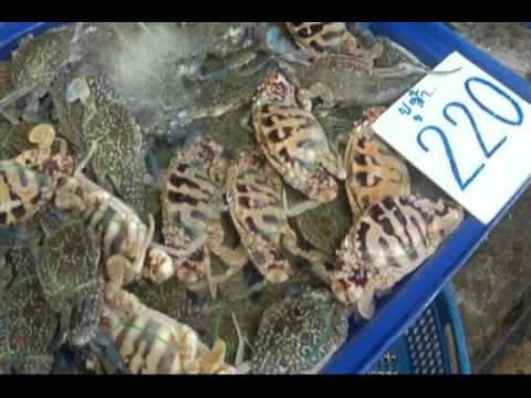Nakula Seafood Market (Pattaya) - More Than Just Seafood.