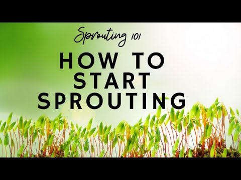 Sprouting 101: How to Start Sprouting