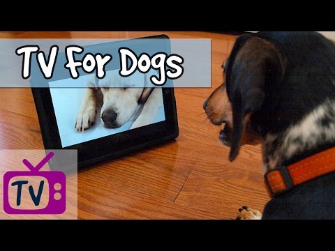 TV For Dogs - Relaxing Television for Dogs, Relaxing Nature Footage for Dogs, Doggy Tv, Relax My Dog
