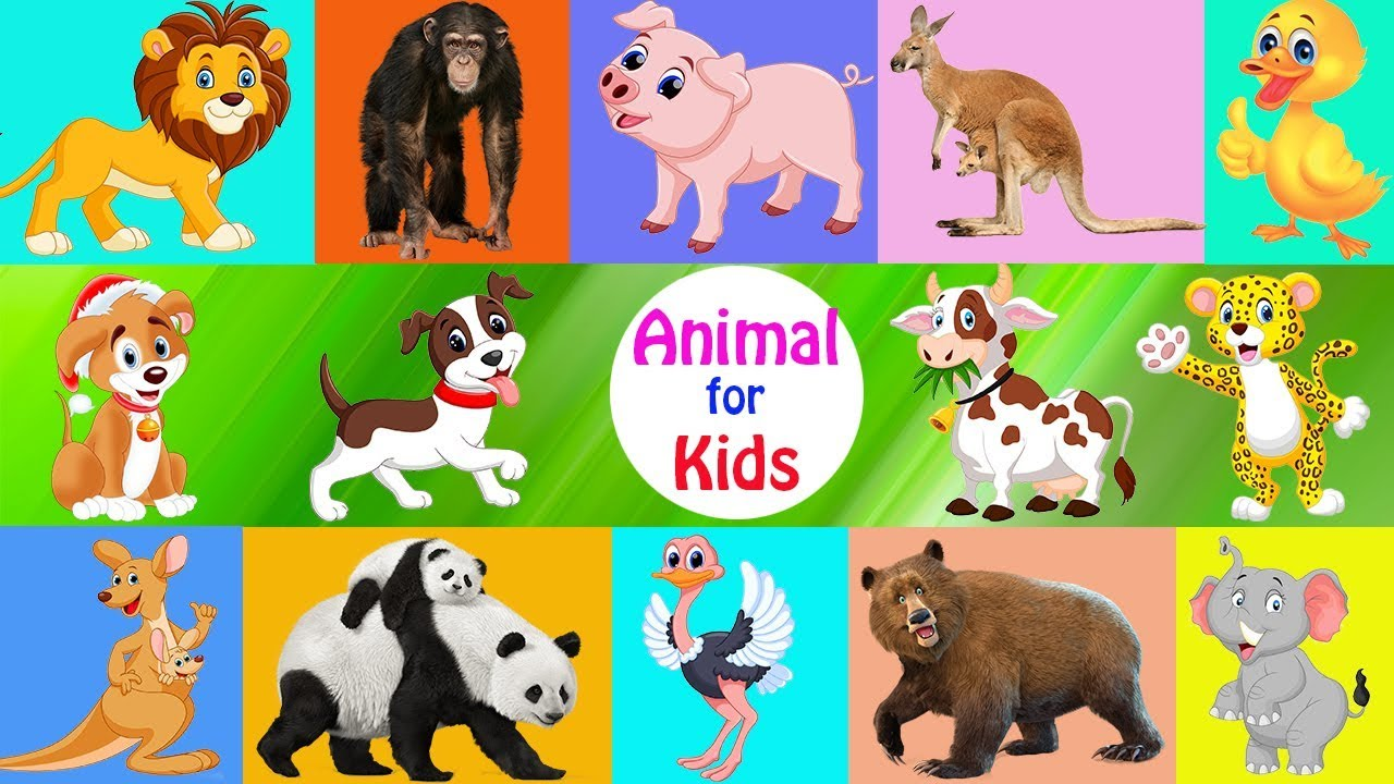 Best educational video for kids - Learn animals cartoon and real for children - Fun Animals 2017