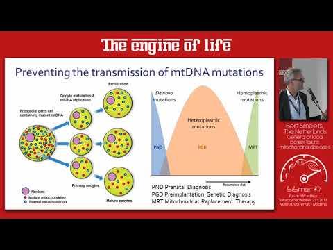 """General or local power failure: mitochondrial diseases"" Prof. Bert Smeets Paesi Bassi"