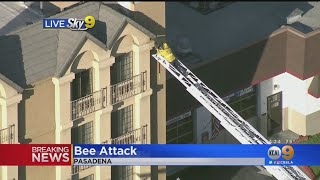 Bee Attack In Pasadena Leaves 2 People Hospitalized, 1 Firefighter Treated For Stings