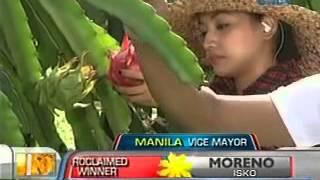 Unang Hirit: Pag-ani ng dragon fruit sa Indang, Cavite