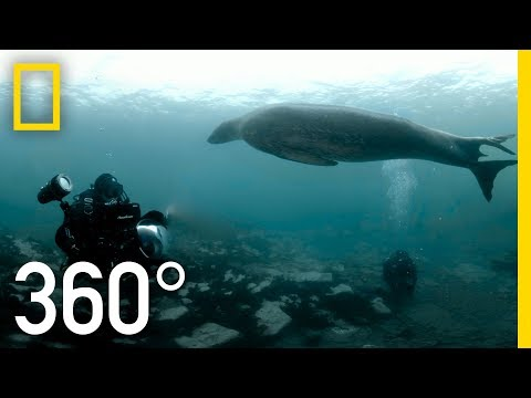 360° Videos | National Geographic