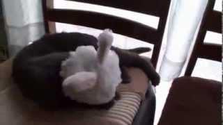 Научить одеваться кошек самостоятельно