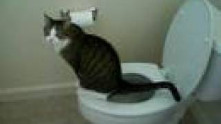 Steps to Toilet Train Your Cat!