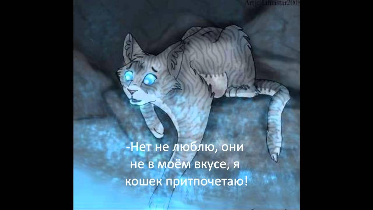 Коты Воители  Интервью прикол MyTub.uz