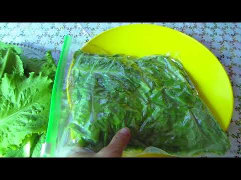 Как сохранить зеленый салат на зиму