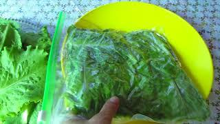 Зелёный салат! Заготовки на зиму. Заморозка