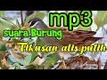 Suara Pukat Burung Tikusan Alis Putuh  Mp3 - Mp4 Download