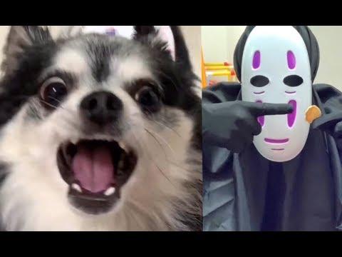 チワワの逆鱗に触れてしまったカオナシ~チワワがキレるとこうなる~My dog is furious about KAONASHi's  actions.