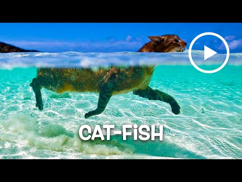 ► CAT-FISH LOVE WATER: PART 2  – Compilation January 2016