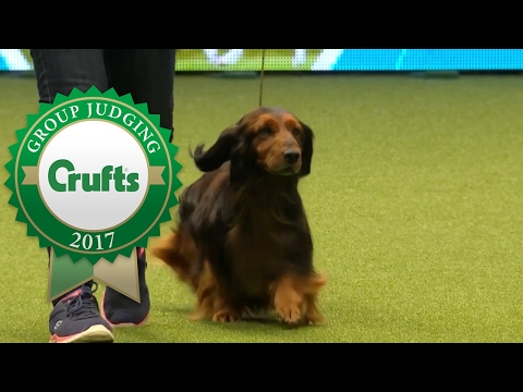 Hound Group Judging and Presentation | Crufts 2017