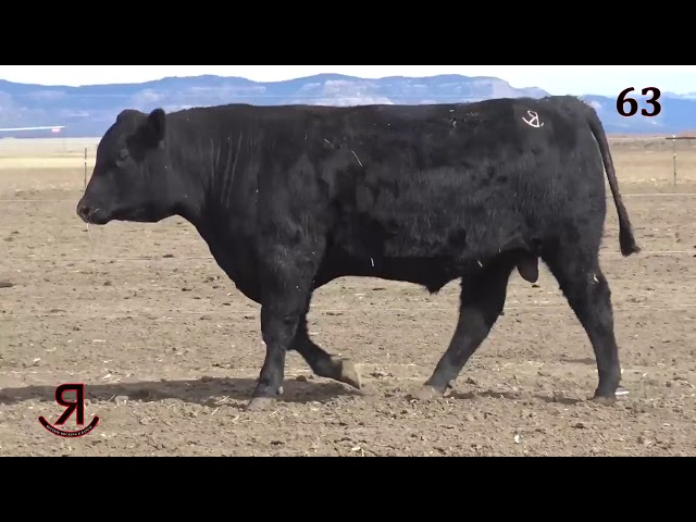 Reverse Rocking R Ranch Lot 63