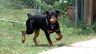 Obedience Training Your Dog – The Importance Of Rewards