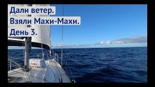 Дали ветер Пои мали Махи Махи Трансатлантика день 3 Жизнь на яхте Cupiditas