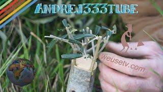 Food Forest - Innesto a corona tra olivo selvatico ed olivo di Gaeta