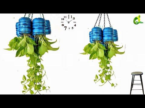 Money Plant Growing Idea/Money Plant Tree/Indoor Money Plant/Hanging Money Plant/ORGANIC GARDEN
