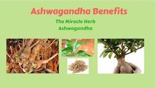 Benefits of the Miracle Herb || Ashwagandha