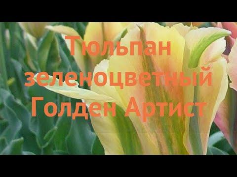 Тюльпан обыкновенный Голден Артист (tyulpan) �� обзор: как сажать, луковицы тюльпаны Голден Артист